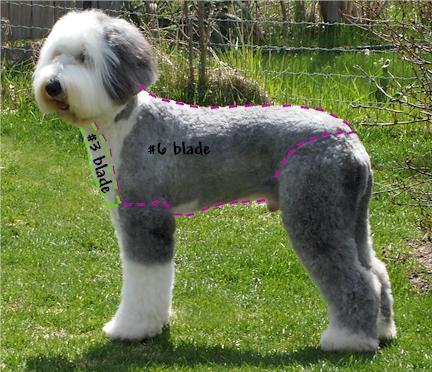 How Much Dog Hair Cut Ontario